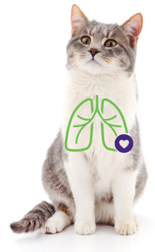 Cat with a lung illustration