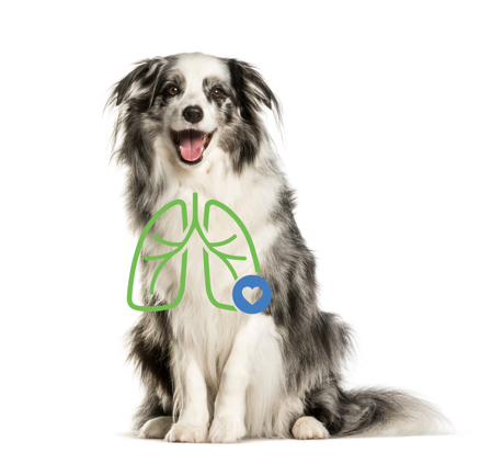 Dog with lung illustration