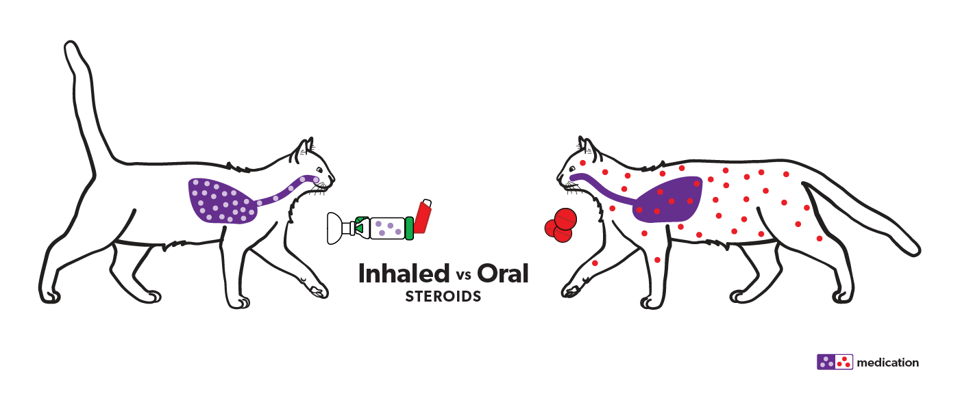Illustration of 1 cat with dots representing systemic steroids through the body and another cat with a chamber with inhaled steroids in the lung