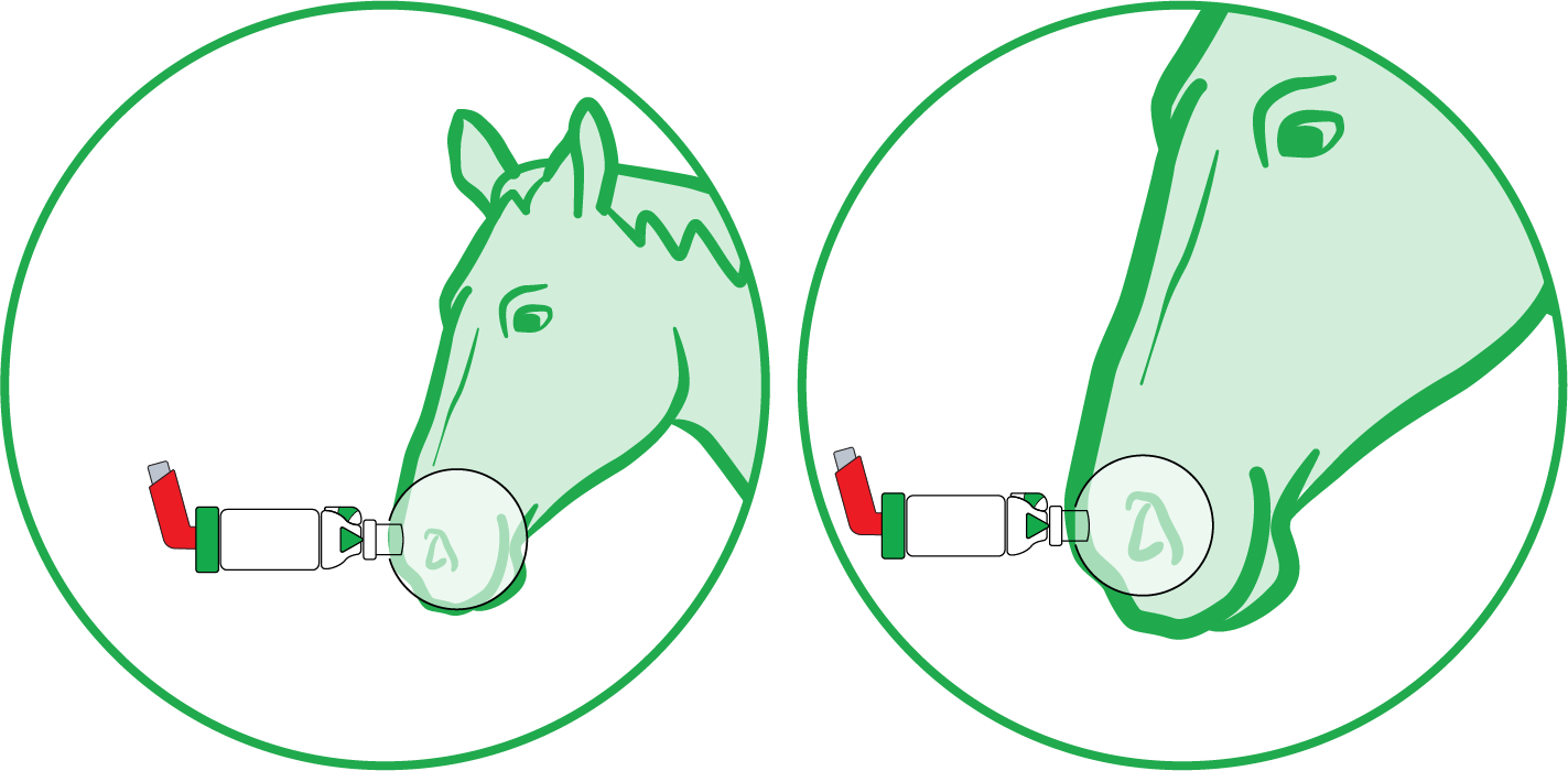mask-fitting-guide-equine-2