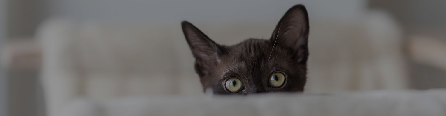 Dark brown cat with green eyes peeking over table.