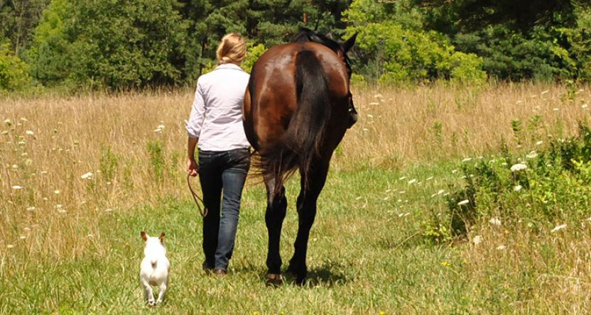 Horse rider and dog walking