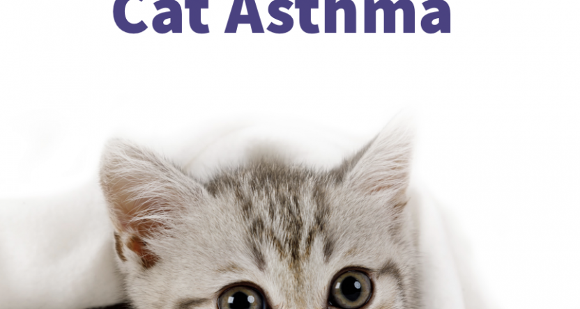 A Guide to Cat Asthma