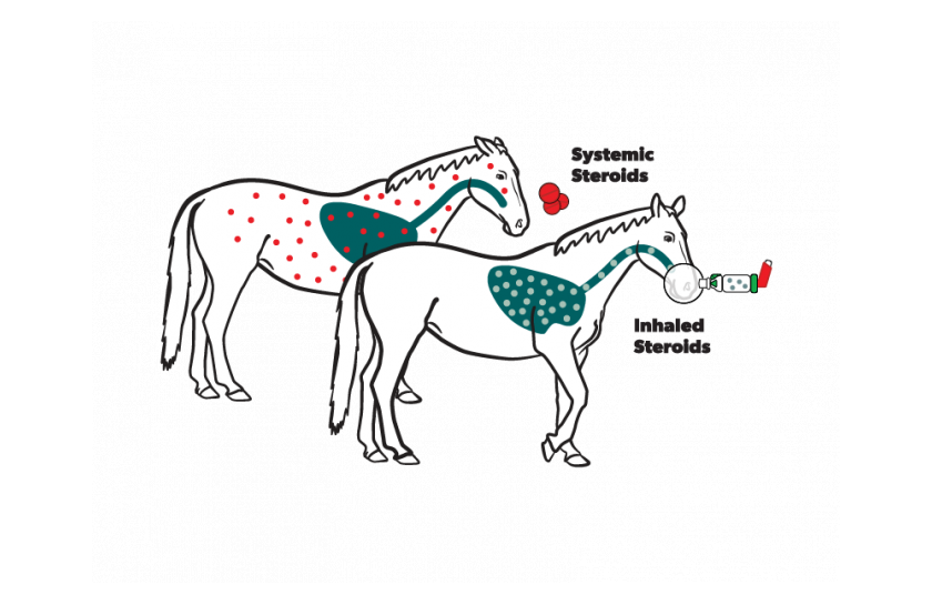 Horse inhaled vs systemic medications