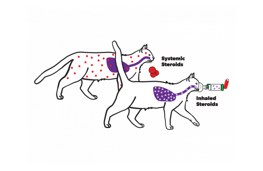 Cat inhaled vs systemic medications